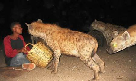 Hyenas Are More Social Than Hedge Fund Managers