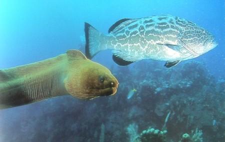 Trans-Species Cooperative Intelligence At Sea