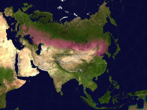 Eurasian Steppe in Pink. Notice How Green & Full of Coastlines Europe Is.