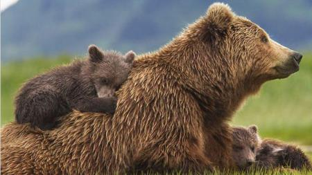 Difference Between Us & Grizzlies? Not Much Greater Love, But Much Greater Smarts.