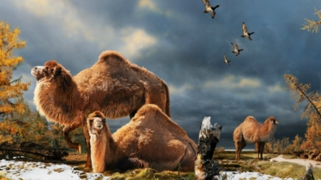 Pliocene Camels Lived As Close To The Pole As One Can Get On Foot