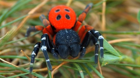This French Spider Monster Is Your Equal, Says Princeton