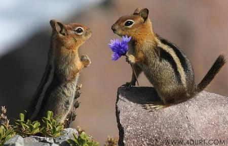 No Love, No Chipmunks. No Heart. No Mind. And No Cuteness.