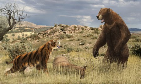 California Scene, 15,000 Years Ago: Smilodon Not Smiling For 4 meter Tall, One Ton Arctodus