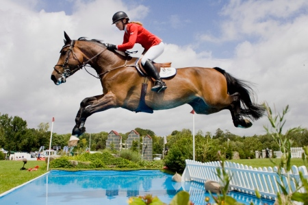 Humans and Horses Are Capable of Reason. Human Reason Was Communicated to the Horse, and This Is How Horses Learn To Jump
