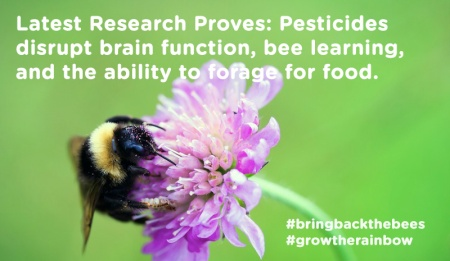 Nicotinoid Insecticides Don't Kill Bees Directly, But Make Them Neurologically Dysfunctional Enough To Die From It